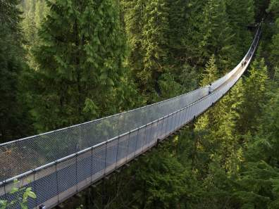 wood-bridge-coniferous-forest